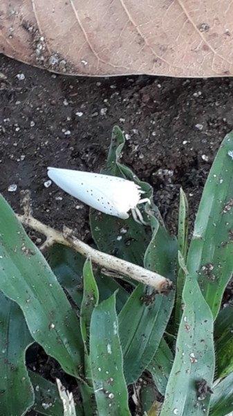 Bichos blancos en las plantas c mo identificar y eliminar for Como saber si me afecta clausula suelo