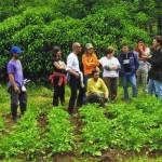 HONGOS DEL HUERTO: OIDIO, MILDIU, ROYA Y BOTRITIS