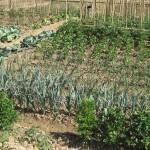 Huertos ecológicos, un nuevo modelo de vida entretenido y saludable