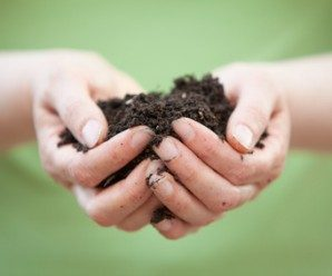 sustratos ecológicos y fertilizantes naturales