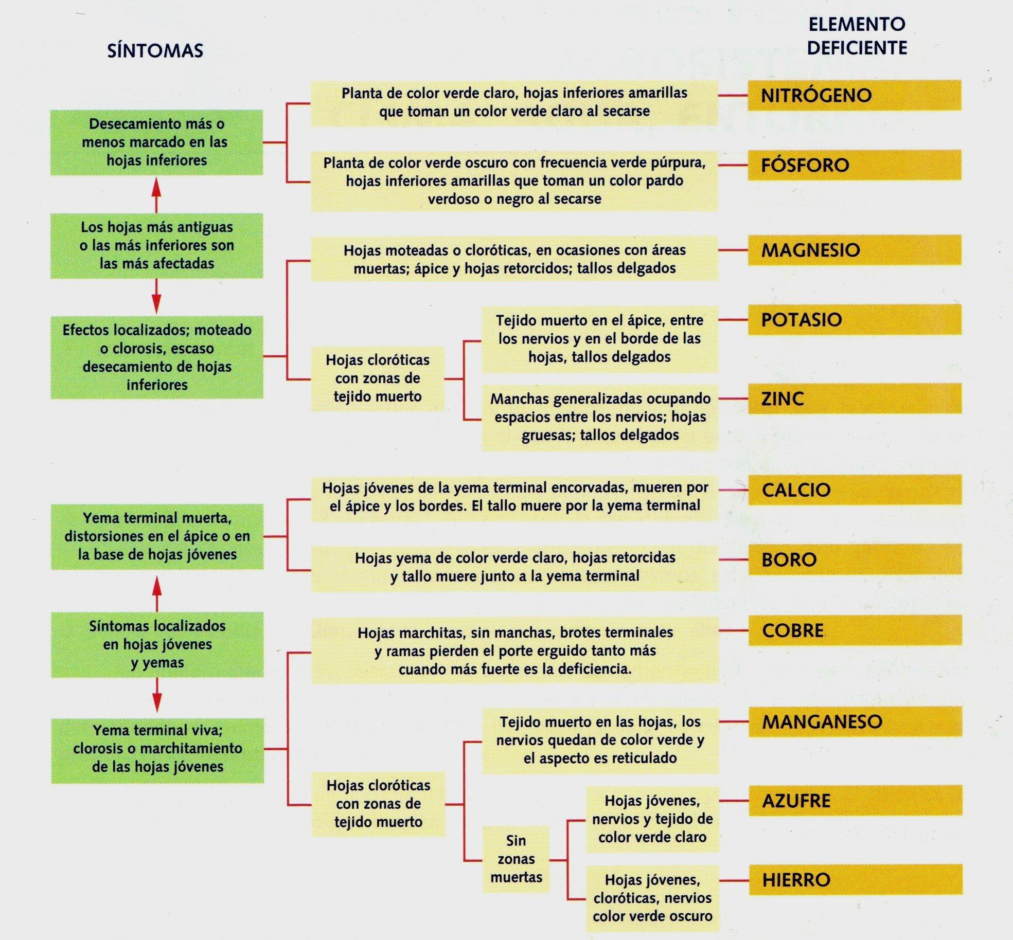 Nutrientes necesarios para las plantas y síntomas de su carencia