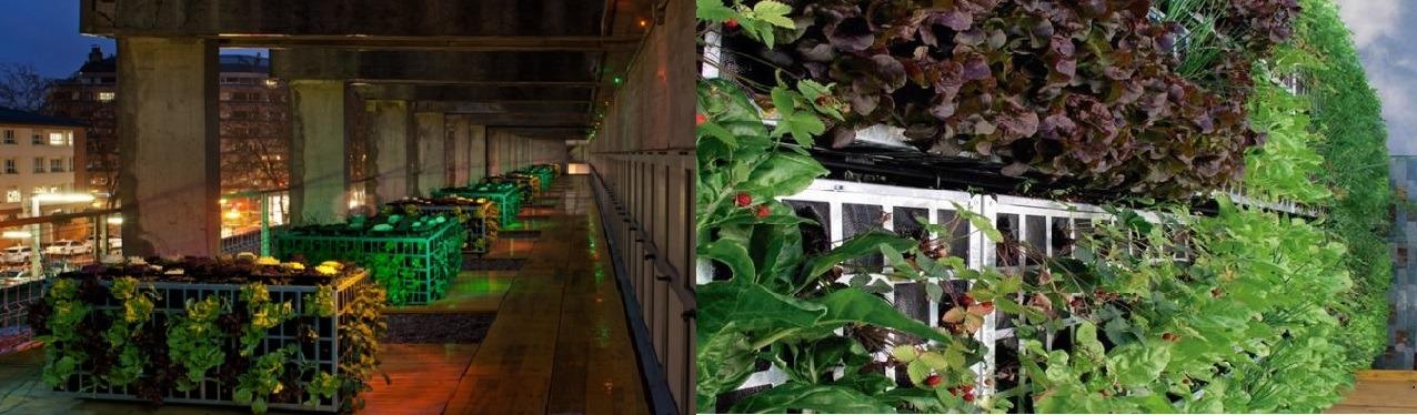 En la primera imagen, un huerto ecológico situado en las cubiertas de la Plaza de Abastos de Vitoria-Gasteiz. La segunda imagen corresponde a un huerto vertical instalado en las paredes del recinto del Polígono Industrial Betoño, también en Vitoria.