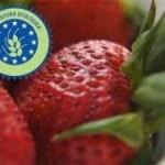 Alimentación Ecológica y Consumo responsable. Hacía una economía más verde