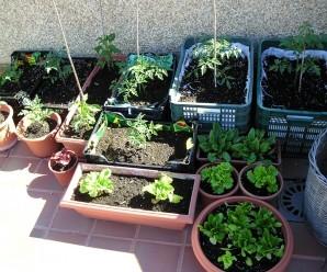 Huerto ecológico en casa: qué se necesita para cultivar un huerto