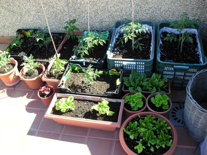 Huerto ecol gico en casa qu se necesita para cultivar un for Que plantas se siembran en un huerto