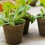 Macetas biodegradables. Recipientes reciclados para el huerto ecológico