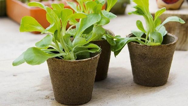 Macetas biodegradables - Soportes para macetas de interior ...