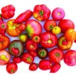 Las variedades locales, la base de la biodiversidad.