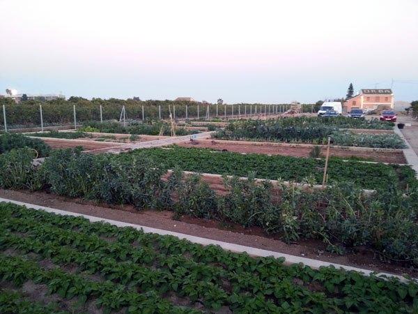 Huertos Ecológicos. Parcelas para alquilar en Tomba L'Olla (Valencia)