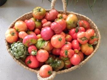 Tomates y Alcachofas ecológicas de los huertos de Montecarmelo