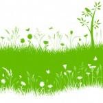 5 Fertilizantes ecológicos
