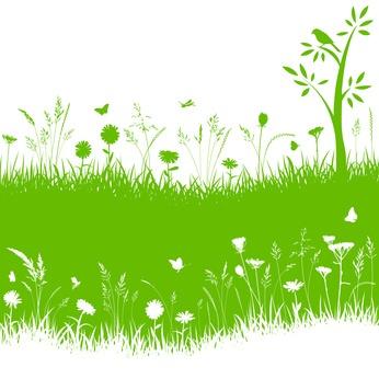 Abono verde para el huerto