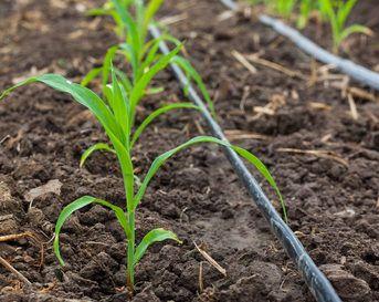 instalar un sistema de riego por goteo en el huerto como parte de la lucha integrada