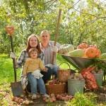 Asociación de Cultivos en el Huerto: Compatibilidad entre plantas