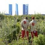HUERTA DE MONTECARMELO. Un oasis de huertos ecológicos en Madrid