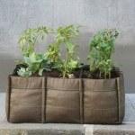 5 problemas de plantas en maceta