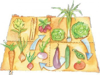 Rotación de cultivos en el Huerto