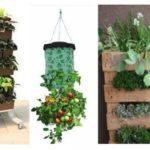 Recipientes de Cultivo para el huerto urbano. Características y tipos