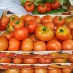 Apadrina un tomate. Huertos ecológicos en Comillas (Cantabria)