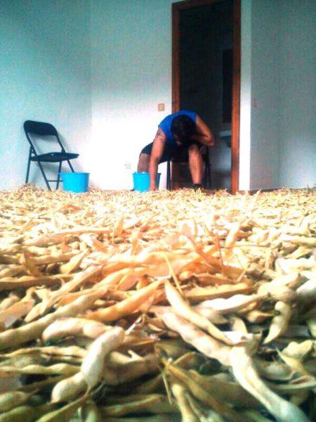 La cosecha de alubias de Apadrinauntomate
