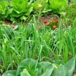 Abonar el Huerto Ecológico. 5 formas de fertilizar de forma natural