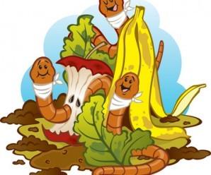 ¿Qué es el humus o compost de lombriz? Vermicompost para el huerto