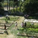 HUERTO ECOLÓGICO EN AGRÓNOMOS- La ETSIA y sus iniciativas ecológicas