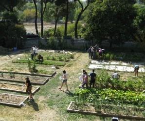 Huerto ecológico en Agrónomos