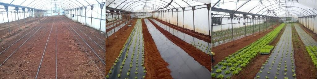 Manejo ecológico de cultivos en los invernaderos de Apadrinauntomate