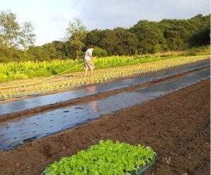 Manejo Ecológico de cultivos en Apadrina un tomate (Comillas, Cantabria)