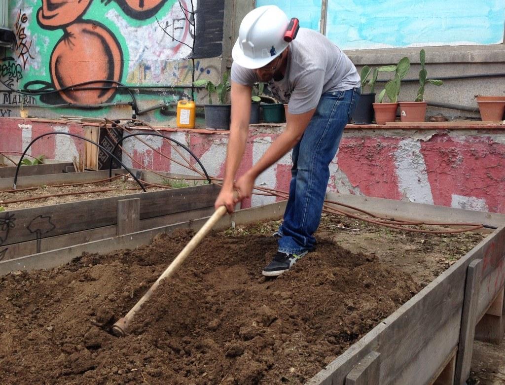 Cultivar un huerto urbano: cavando en las mesas de cultivo