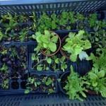 Cultivar un Huerto Urbano: Compostaje y Plantación