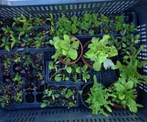 Cultivar un huerto urbano