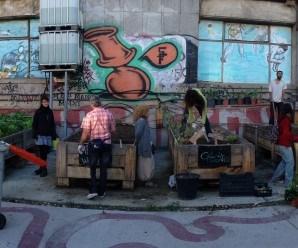 Huerto de El Campo de Cebada