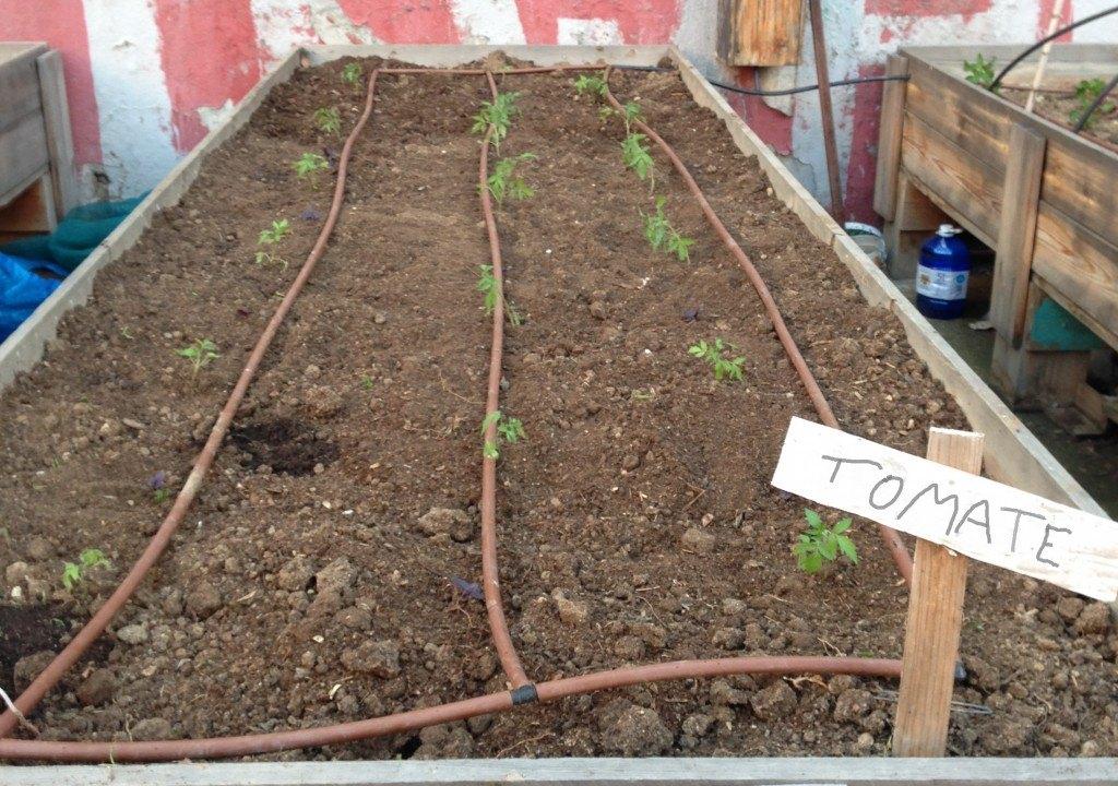 Mesa de cultivo con riego por goteo