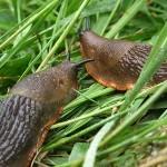 Cómo eliminar babosas y caracoles del huerto y del jardín