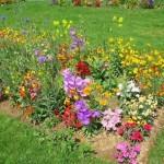 FLORES EN EL HUERTO para alejar plagas o atraer insectos beneficiosos