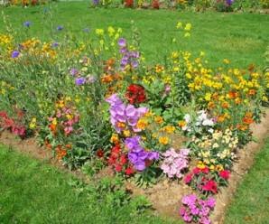 Plantas con flores para el huerto ecológico