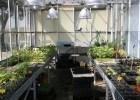 Manejo ecológico en el huerto de la Escuela de Agrónomos
