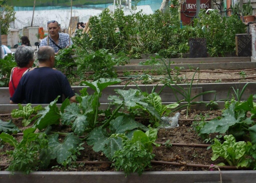 El campo de cebada, un huerto comunitario en Madrid