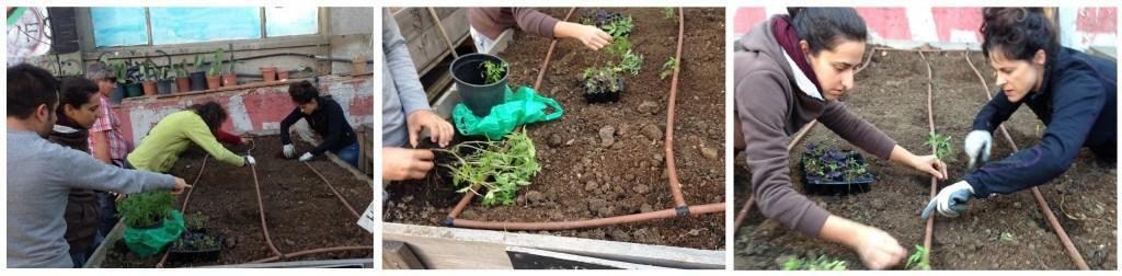 Compostaje y plantación