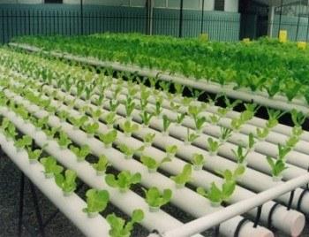 Cultivos hidroponicos para el huerto ecol gico for Casas de pvc para jardin
