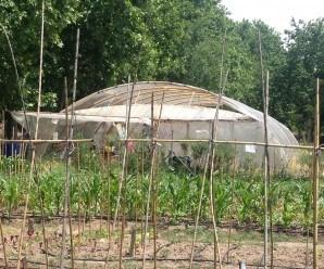 Invernadero de semilleros