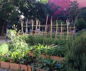 Bancales de cultivo en huerto de lavapies