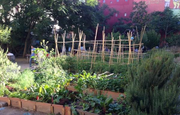 Qu plantas cultivar en el huerto - Plantas de huerto ...