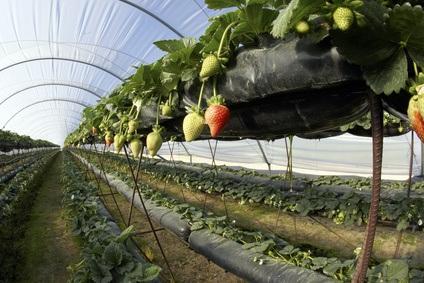 Cultivos hidroponicos para el huerto ecol gico for Que son cultivos asociados