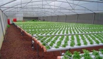 Sistema hidropónico en invernadero - www.hidro-plant.com