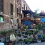 Huerto de LA TABACALERA. Un huerto comunitario en Madrid