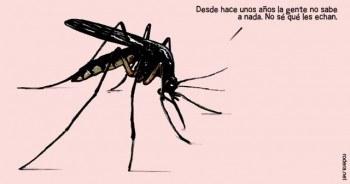 Mosquito. www.bonsaisgigantes.net