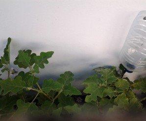 Sistema de riego por goteo casero